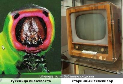Гусеничка пугает хищников высокими технологиями