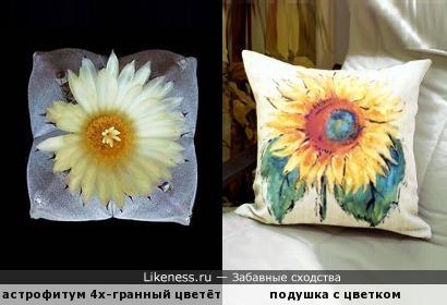 Цветущая подушечка