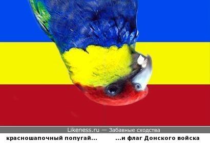 Птичка солидарна