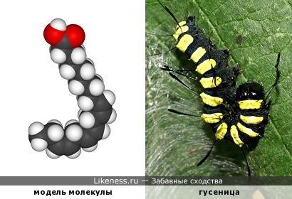3D-модель молекулы линоленовой кислоты похожа на гусеницу