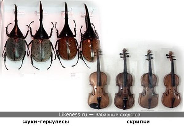 Жуки-музыканты