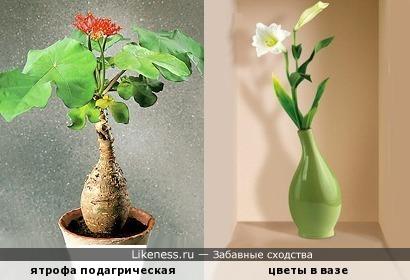 Кто-то носит с собою домик, а кто-то выращивает себе вазу..