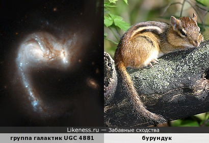 Пекулярные галактики UGC 4881 (Arp 55) напоминают грызуна