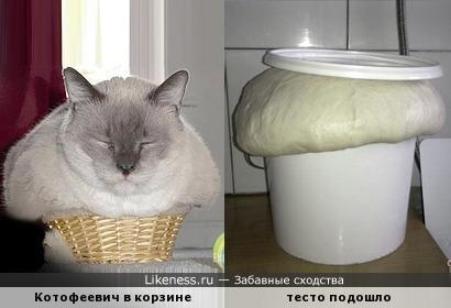 Котик лежит - тесто бежит...