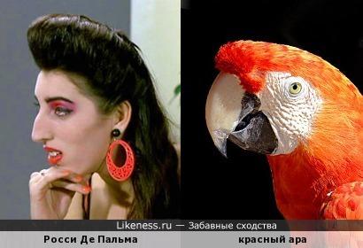 Пальма... и райская птица