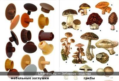 По грибы, по заглушечки