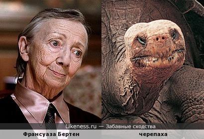 Черепаха напомнила Франсуазу Бертен