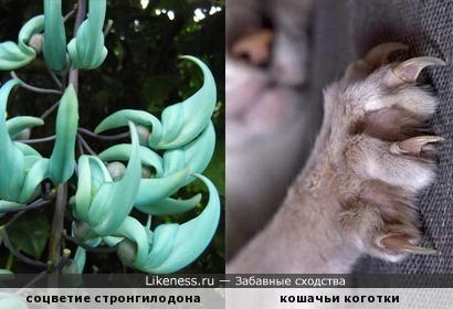 """Распустились чудо-почки: """"накладные коготочки"""""""
