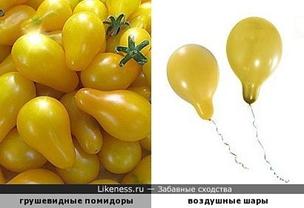 Грушевидные помидоры похожи на воздушные шары