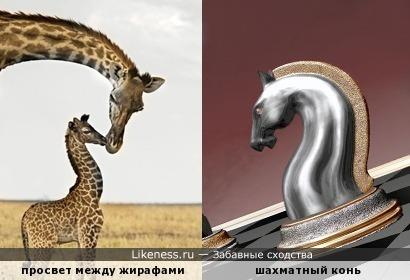 """""""Конь"""