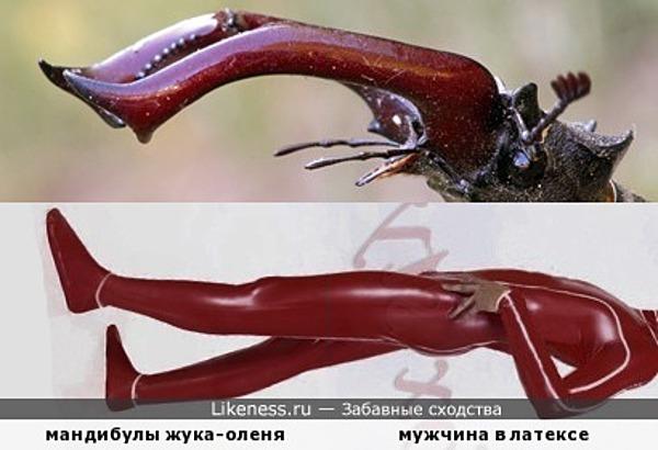 Сенсация века: жук заглотил человека!
