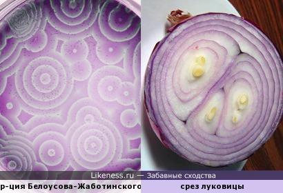 Реакция Белоусова-Жаботинского на стоп-кадре напоминает срез луковицы