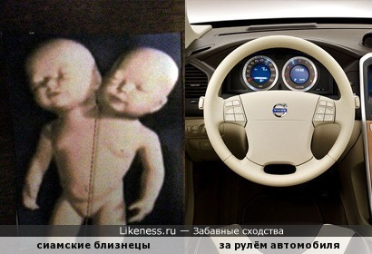 Сиамские близнецы за рулём автомобиля