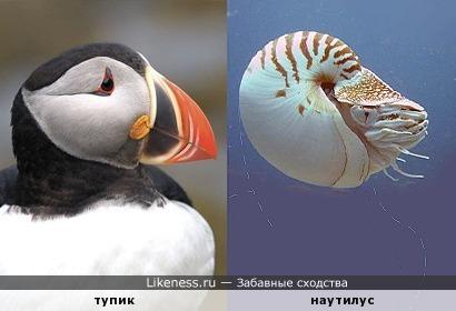 Средь волн морских степенная плыла обыкновенная набыченная птичья голова...