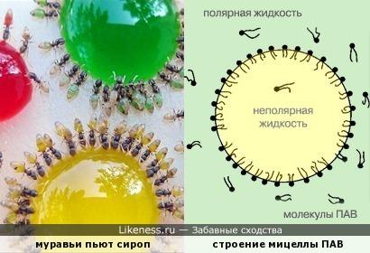 Поверхностно-активные муравьи