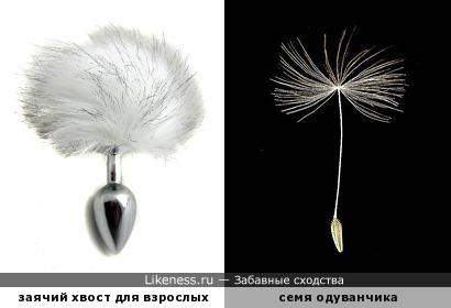 заячий хвост для взрослых похож на семя одуванчика