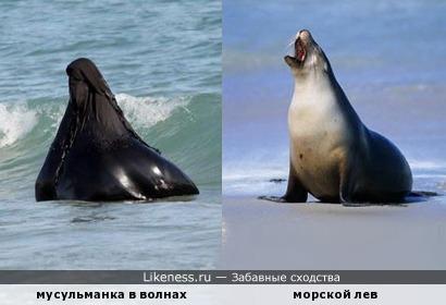 Шла по берегу девчонка – озирались все вокруг. А тюлень, вдали лежавший, полагал, что это друг.