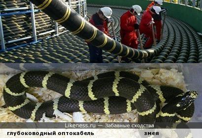 Дна коснулась чешуя: очень длинная змея направлялась к берегам, чтобы выдать цифру там...