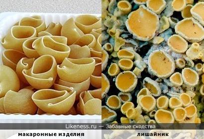 Слева, справа макароны, макароны там и тут... Даже на пеньке трухлявом «макарончики» растут!
