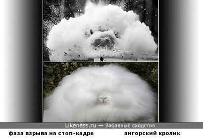 Как-то раз о взрыве посмотрел я ролик. В кадре на мгновенье появился... кролик!