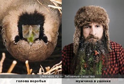 Парень в шапке, не робей, слева смотрит воробей!... ;)
