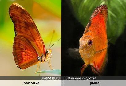 Пара – бабочка с рыбёшкой – над землёй и под водой. Ярко-рыжая одёжка и у этой, и у той...