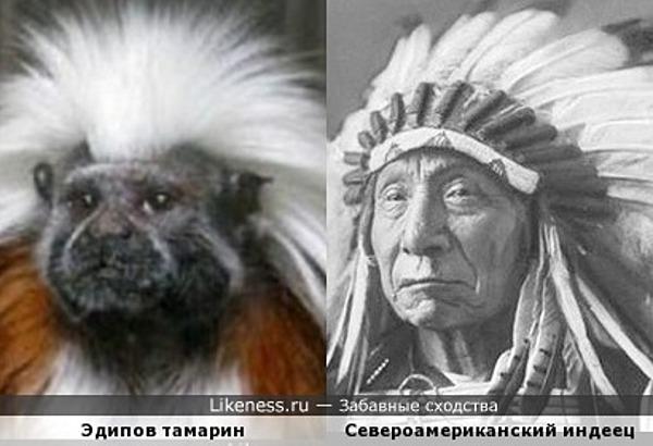 По Дарвину: Индейцы произошли от тамаринов.