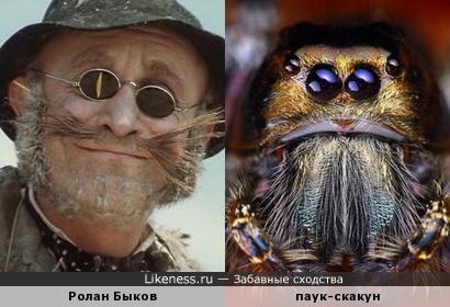 Кот напоминает паука