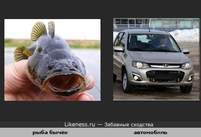 рыба похожа на машину