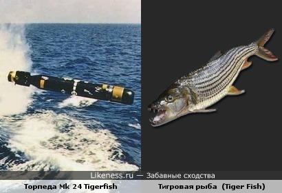 """Лингвистический пост: торпеда """"Тайгерфиш"""" фирмы """"Маркони"""" и тигровая рыба голиаф (Tiger Fish)"""