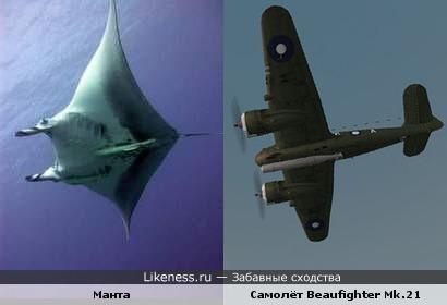 """Манта с рыбой прилипалой похожа на двухмоторный самолёт """"Бристоль Бофайтер"""" с торпедой"""