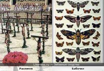 Массовые распятия преступников в Древнем Риме напоминают выставку коллекционных бабочек
