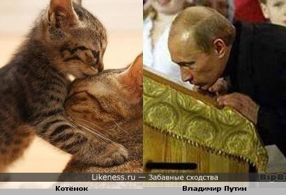 Котёнок напоминает Владимира Путина