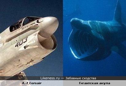 Гигантская акула на likeness ru 1 сходство