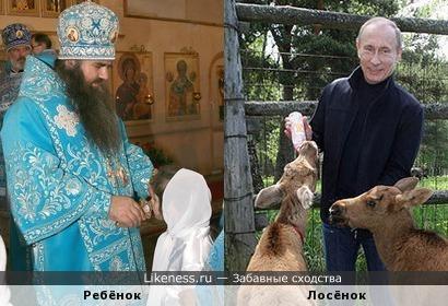 Ребёнок, употребляющий крест из рук попа, напоминает лосёнка, употребляющего молоко из рук Путина