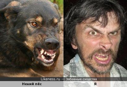 Какой-то злобный пёс напоминает меня
