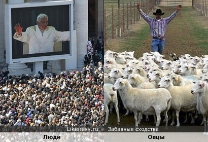 Духовные пастыри хозяйничают там, где изобилует духовный скот