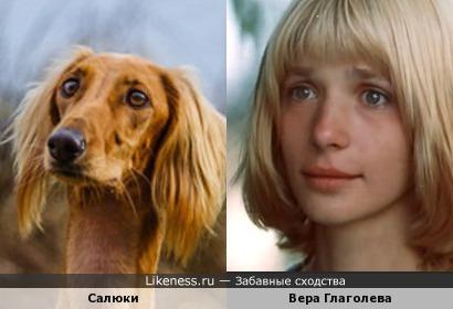 Вера Глаголева чем-то напомнила собачку породы салюки