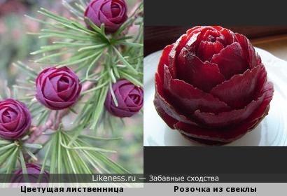 Цветущая лиственница и розочка из свеклы