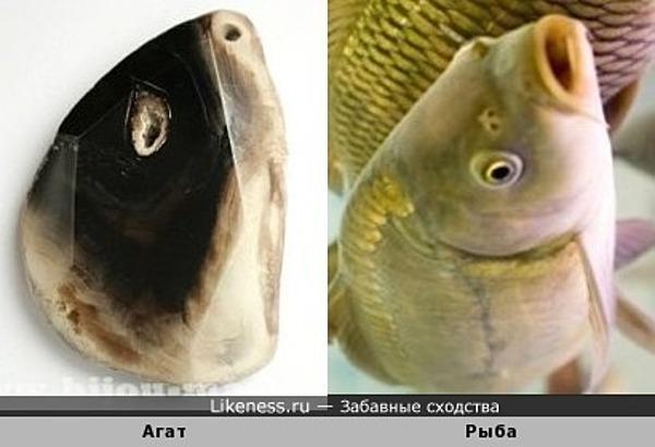 Ах ты, рыбий глаз! (с)