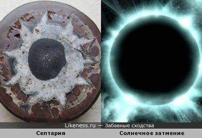 Септария в разрезе как солнечное затмение