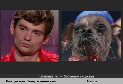 Венцеслав (Дом 2) похож на Магли (самая некрасивая собака 2012 года)