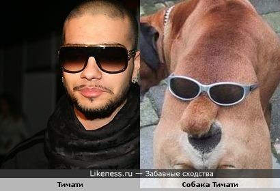 Тимати похож на свою собаку
