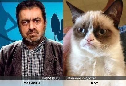 Армянский кот
