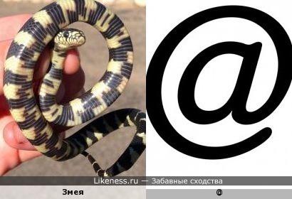 @ - это не собака, а змея