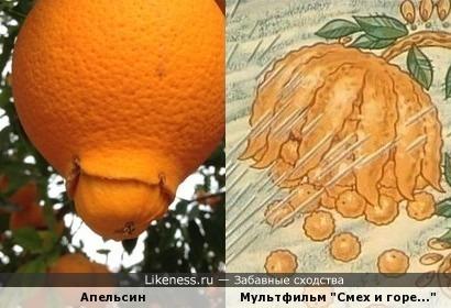 День рождения апельсина