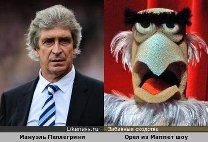 Тренер и орел