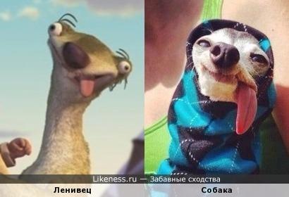 Ленивец и собака