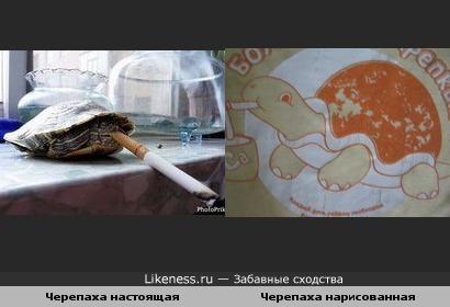 Можно в принципе и черепаху научить курить...