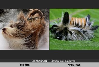 Причёска-отдыхай моя расчёска